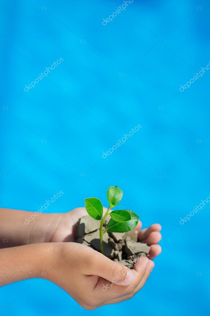 Young plant in hands against blue sea background