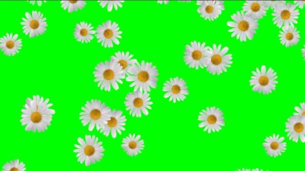 Jarní záběry video pozadí. Pěkný klesající růží videozáznamu pro svatební filmy. Svatební Úvod jara filmy s padající okvětní lístky růže. Video s padající okvětní lístky Hd kvalita svatební intro