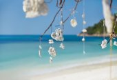 strom nad tropickou pláž