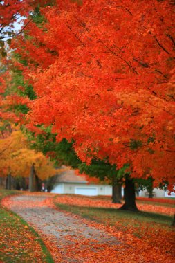 Bright red autumn trees