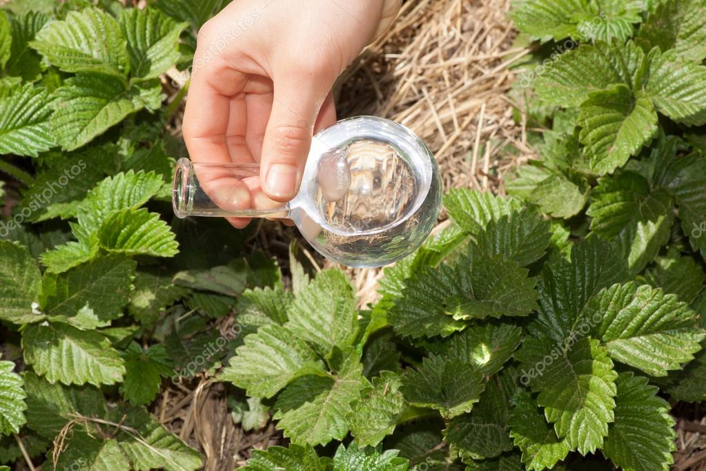 flask with clear water  and green plants