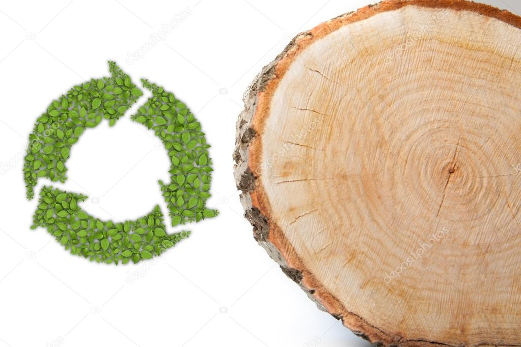 Cross section of tree trunk with recycle symbol, on white background