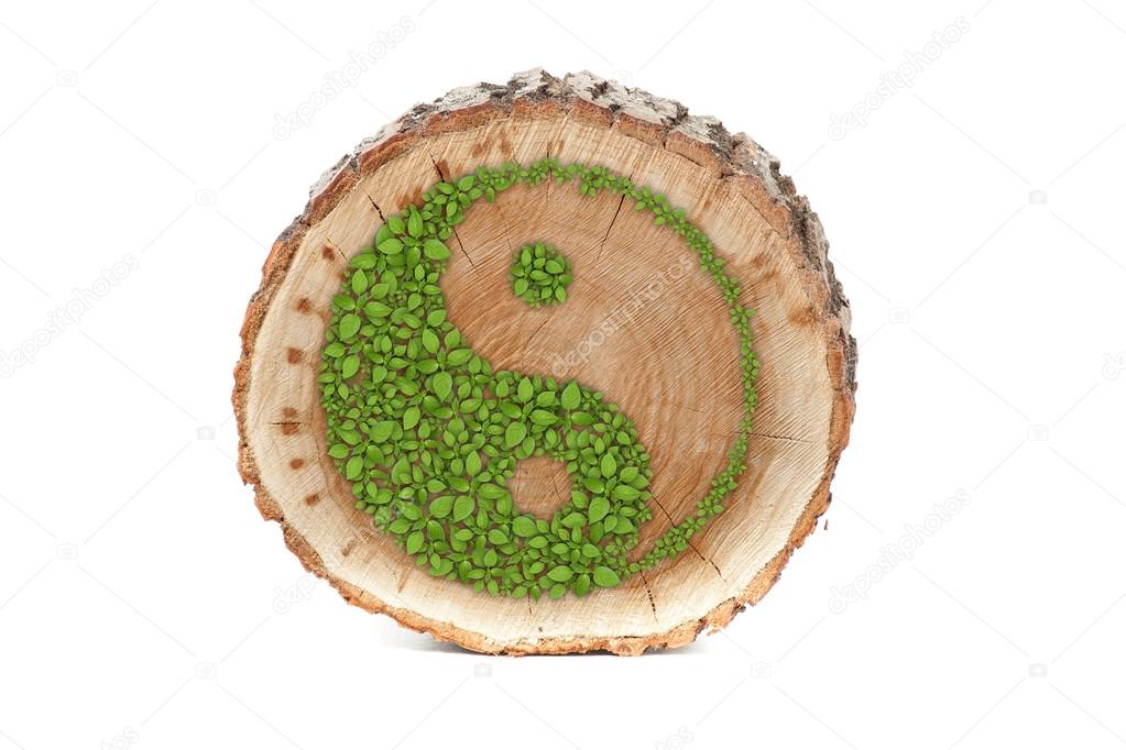Cross Section Of Tree Trunk With Ying Yang Symbol Stock Photo