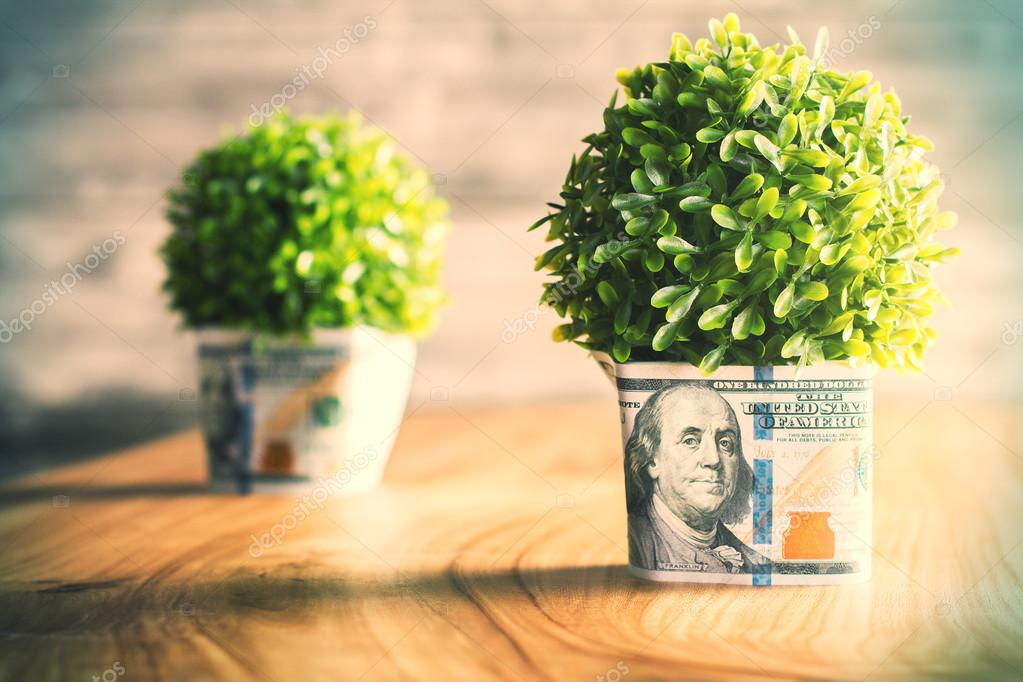 Plants with dollar bills around the pots on wooden desktop