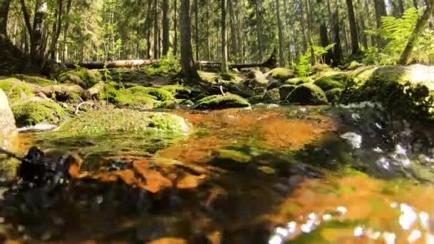 Small cascading creek