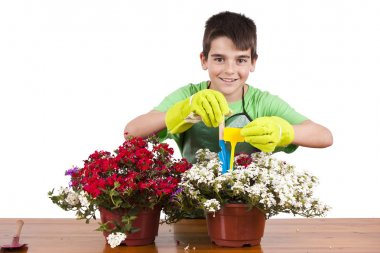 flowers and gardening