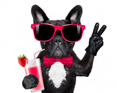 cocktail smoothie dog