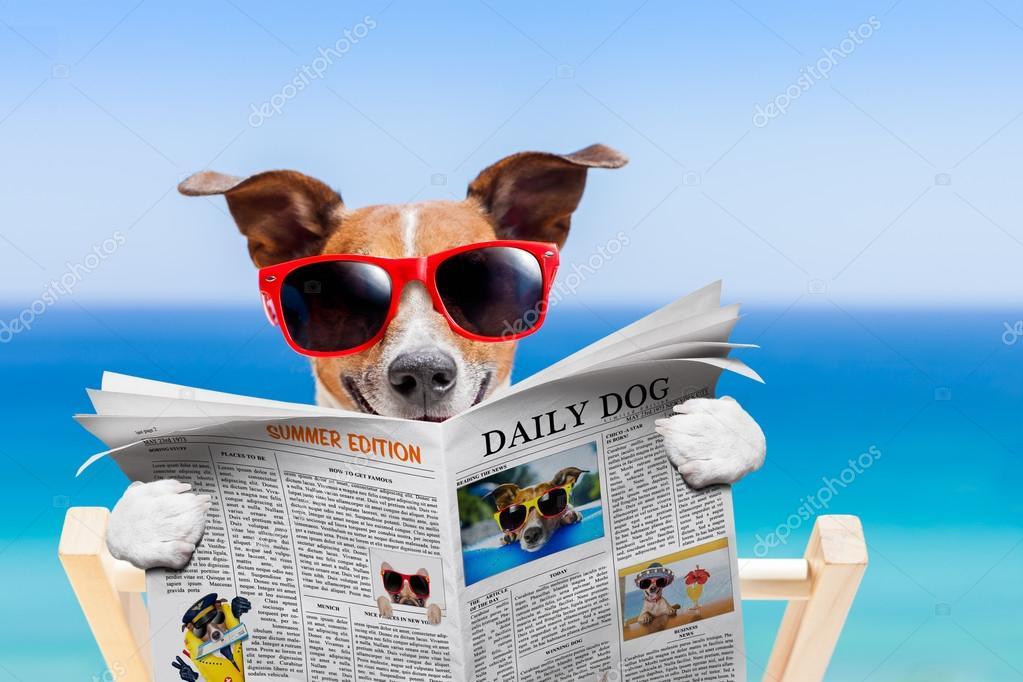 451 Dog reading newspaper Stock Photos | Free & Royalty-free Dog reading  newspaper Images | Depositphotos