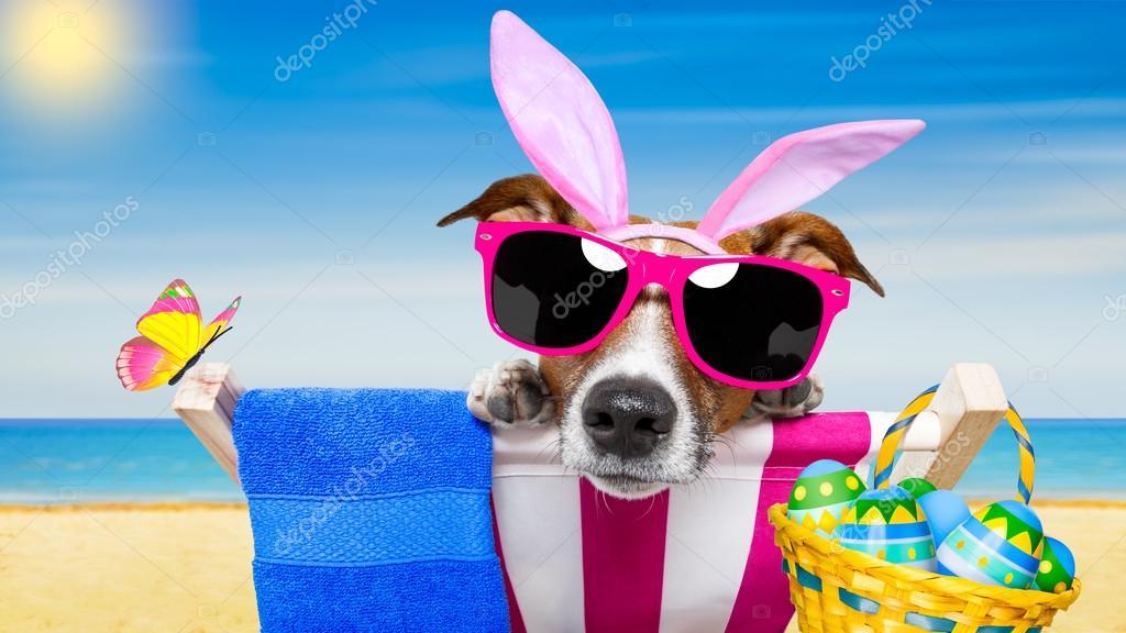 собака очки кровать без смс
