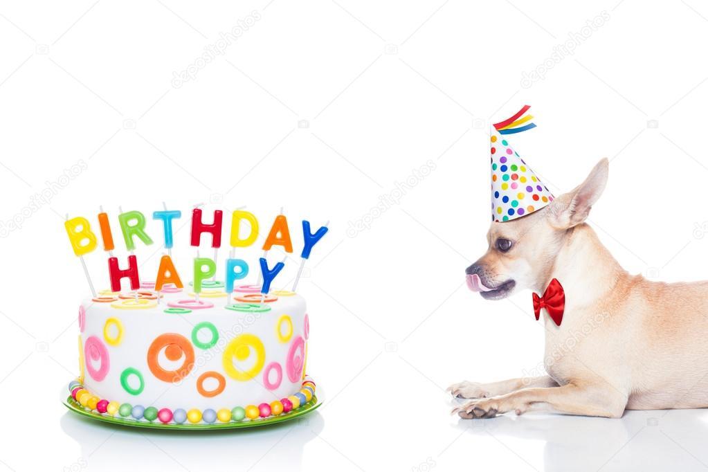 Pes Chihuahua chuť na všechno nejlepší k narozeninám dort s candels c756f3f05b
