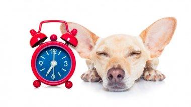 sleeping dog mask
