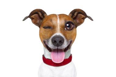 Emoticon or  Emoji dumb  silly dog