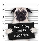 mugshot pes