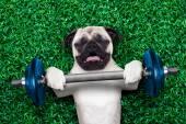 sport kutya