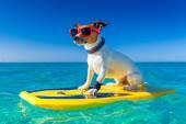 Fotografie Surfer-Hund