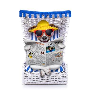 dog beach chair