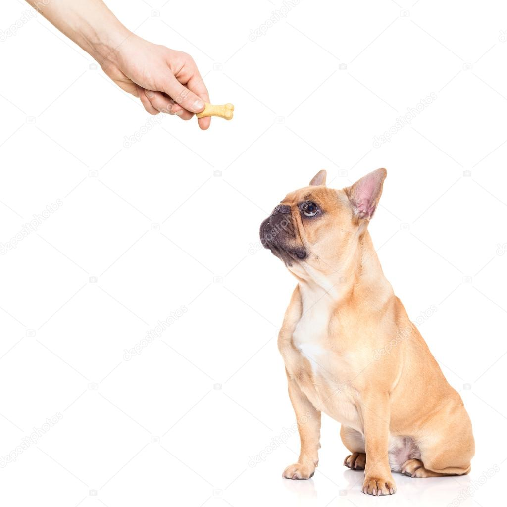 Dog trat
