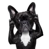 Fotografie Hund hören