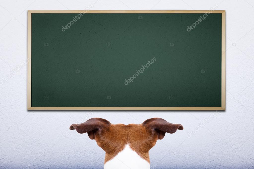 Dog at school