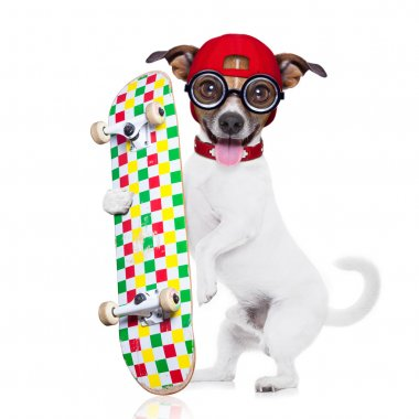 Jack russell skater dog with red cap ready to play, holding skateboard, isolated on white background stock vector