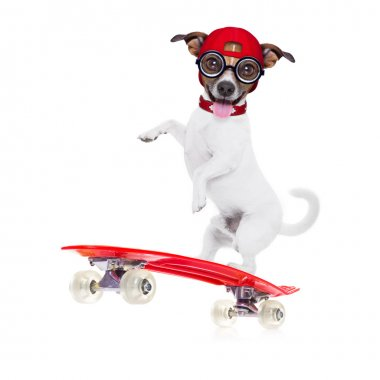 Jack russell skater dog with red cap ready to play, balancing on red  skateboard, isolated on white background stock vector