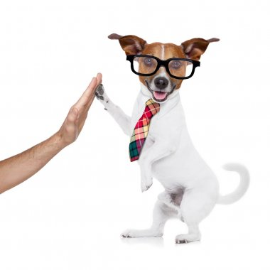 business dog high five