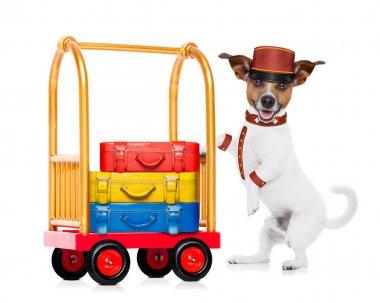 bellboy dog