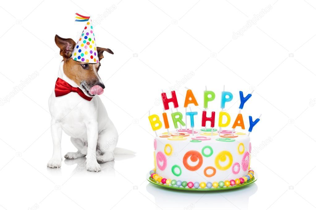 boldog születésnapot kutyás Boldog születésnapot kutya — Stock Fotó © damedeeso #72492121 boldog születésnapot kutyás