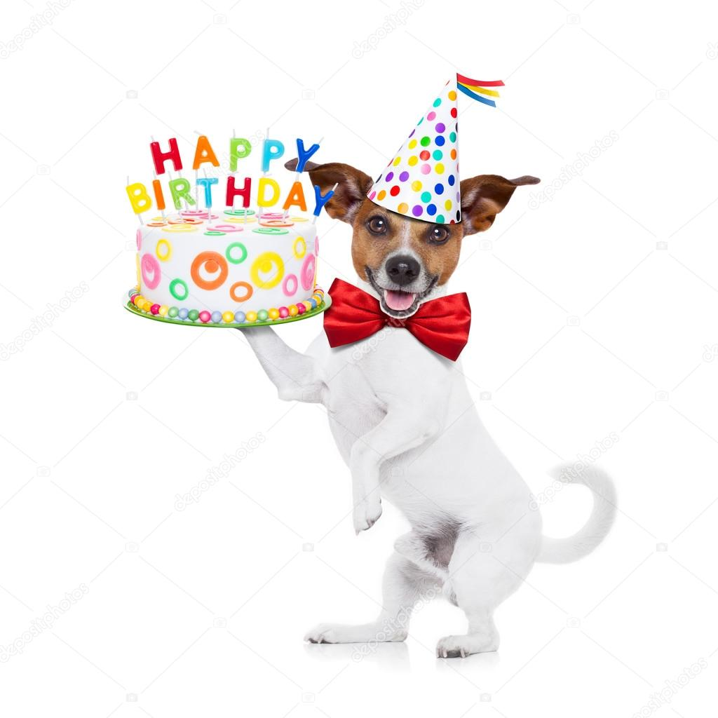 happy birthday dog — Stock Photo © damedeeso #72492139 - photo#22