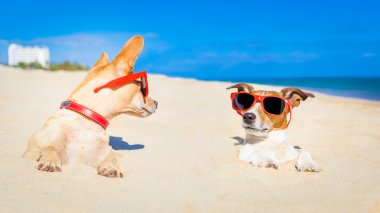 Couple of two dogs  buried in the sand at the beach on summer vacation holidays , having fun and enjoying ,wearing red sunglasses fun and enjoying ,wearing red sunglasses stock vector
