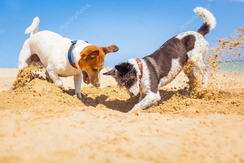 depositphotos_74208479-stock-photo-dogs-digging-a-hole