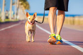 Photo Dog and owner walking