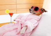 kutya spa wellness