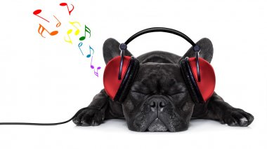 French bulldog dog listening to music with earphones or headphones,while relaxing or sleeping on the floor, isolated on white background stock vector