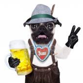 Fotografie Überrascht verrückte Bayerische Hund