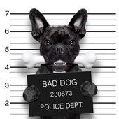 mughsot dog bone