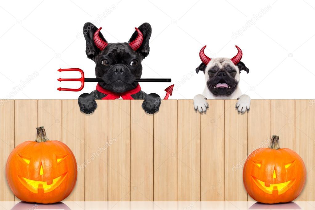 Wiersz O Halloween Psy Zdjęcie Stockowe Damedeeso 84238398