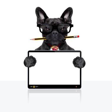 office worker dog