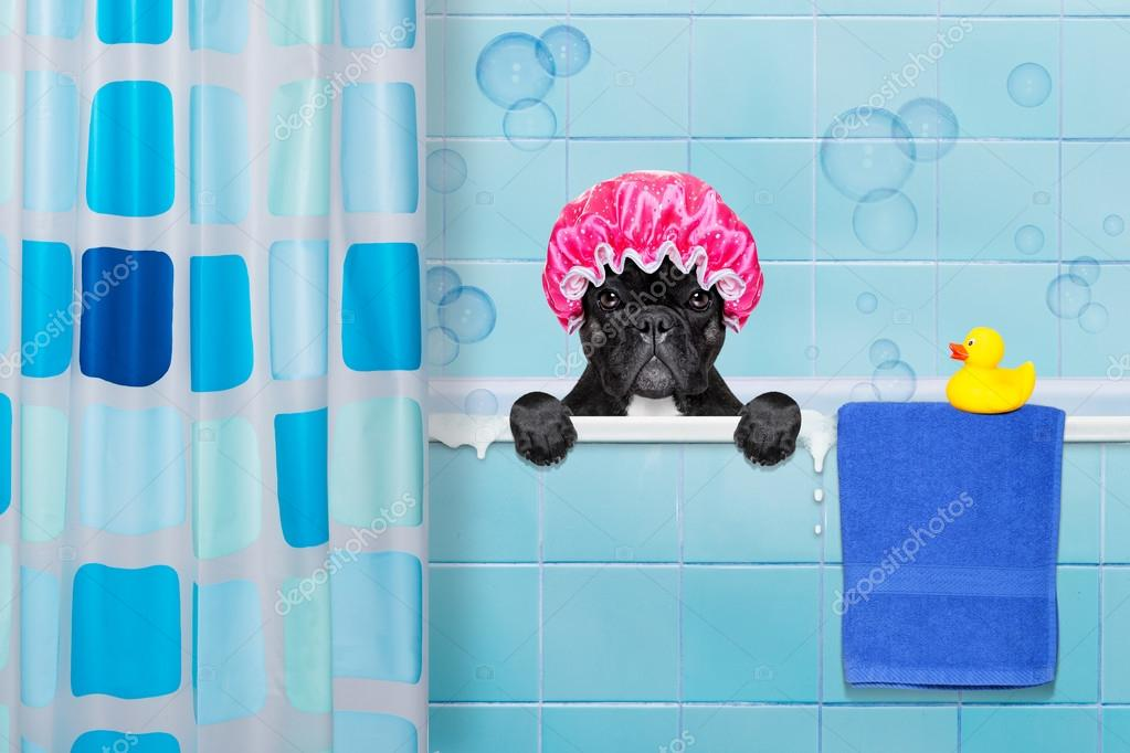 Vasca Da Bagno Non Scarica : Cane in doccia u foto stock damedeeso