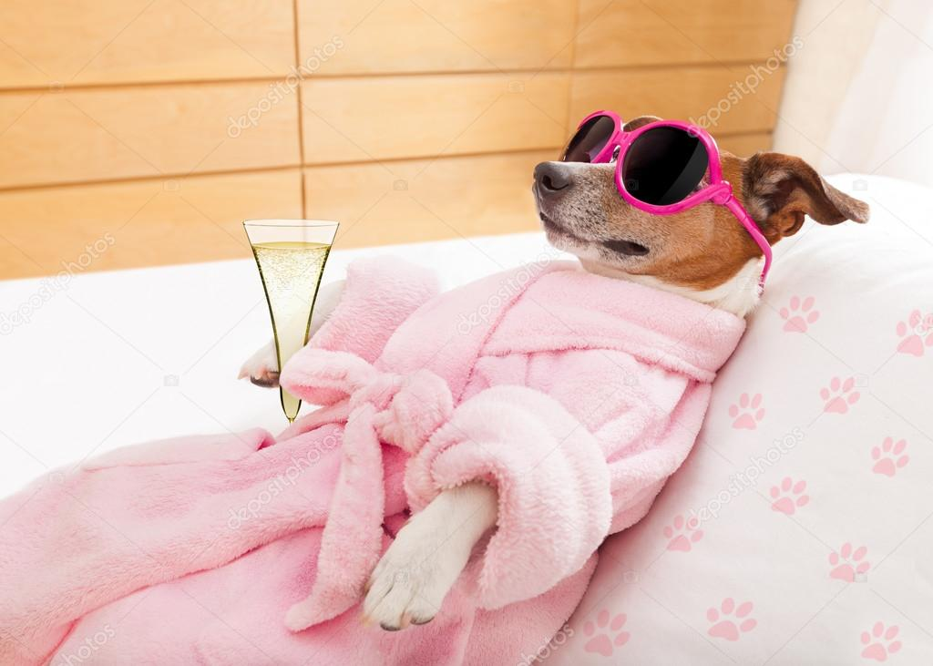 Relax Spa Wellness Dog Stock Photo C Damedeeso 95913636