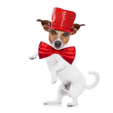 party animal dog