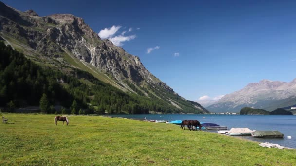 Na pastvě poblíž jezera Sils