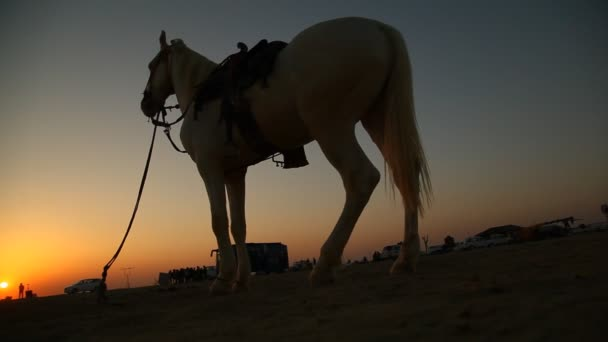 Silhouette of Horse in the desert Rajasthan India