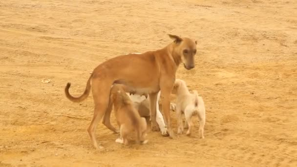 Dogs at rural area Desert