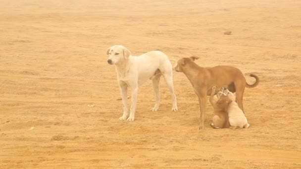 Dogs at rural area Desert