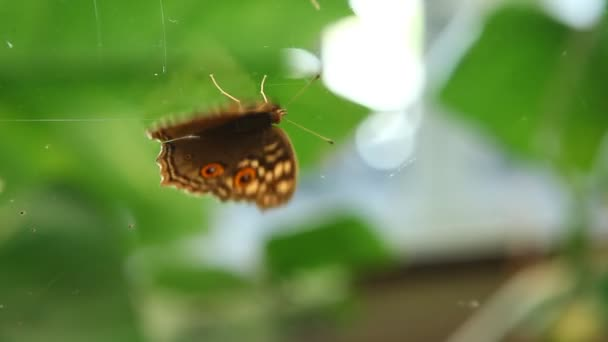 Butterfly on the Glass