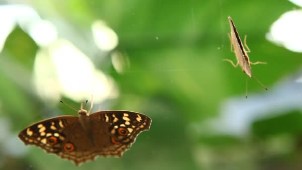 Pillangó az üveglapra a képet tartalmazó