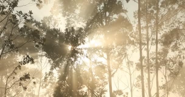 Sluneční paprsky skrz stromy