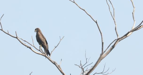 Ptačí orel na stromě
