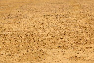 Desert Landscape in India
